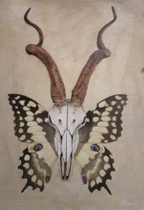 Still life of antelope skull and butterfly wings
