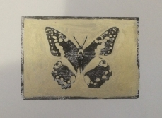 """""""Principus Demodocus""""- Hand-coloured linocut of a butterfly in black and gold"""